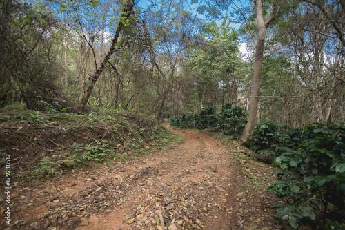 Papiers peints Route dans la forêt Coffee Plantation