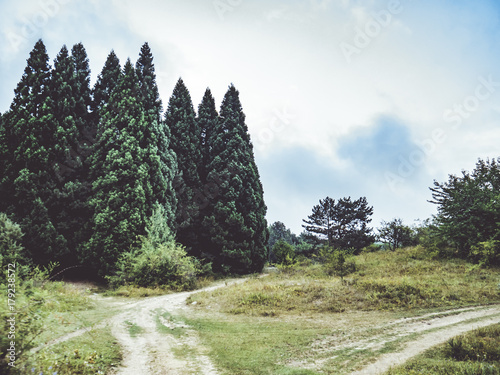 Foto op Canvas Grijze traf. mountain forest trees
