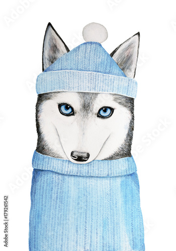 Cute husky dog in a blue winter hat and warm sweater. A sweater place can be used to place your text or message. Hand painted watercolor illustration, isolated on a white background - 179261542
