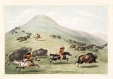 Old watercolor illustration of native indians hunting buffalos running on a vast grassland. By G. Catlin, publ. on Catlin's North American Indian Portfolio Ackerman, New York, 1845 - 179265304