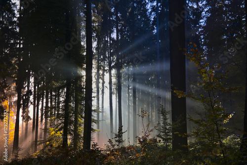 Fotobehang Betoverde Bos Abendsonnenstrahlen im Herbstwald