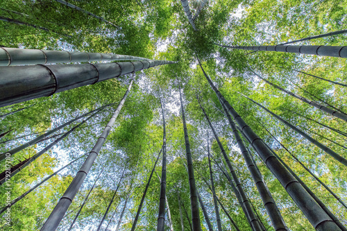Fotobehang Bamboe look up in green bamboo forest