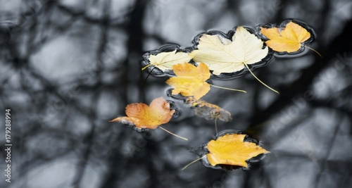 Foto op Plexiglas Donkergrijs Close up of Autumn leaves on the river