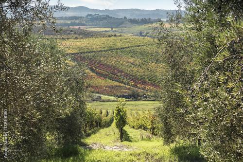 Deurstickers Toscane Weinfelder und Olivenbäume derToskana