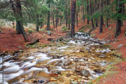 Papiers peints Rivière de la forêt La Barranca