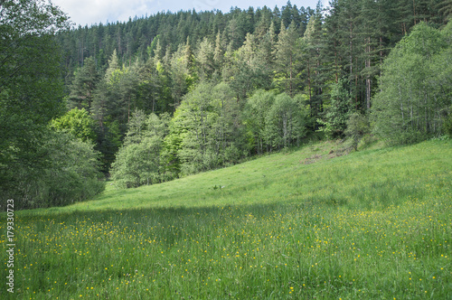 Foto op Canvas Pistache Green meadow and forest
