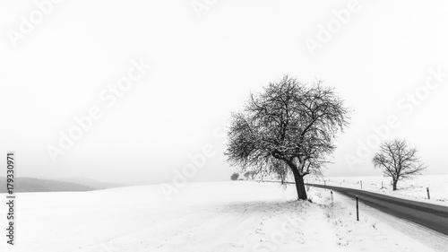 artystyczna-minimalistyczna-zimowa-scena-w-czarny-i-bialy
