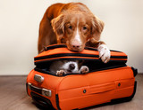 Two dogs and a suitcase - 179334334
