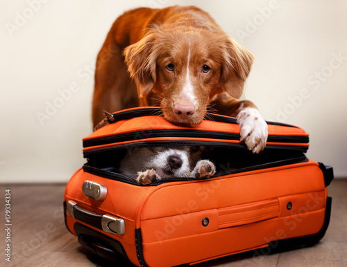 obraz PCV Two dogs and a suitcase