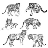 Hand drawn sketch style tigers. Vector illustration isolated on white background.