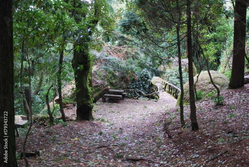 Aluminium Weg in bos Paisagens Geres/Douro