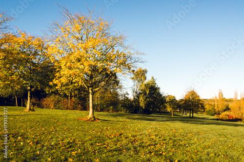 Fotobehang Herfst Autumn scenery on sunny morning in Campbell park, Milton Keynes 2