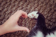 Person's hand and a cat's paw making a heart shape.