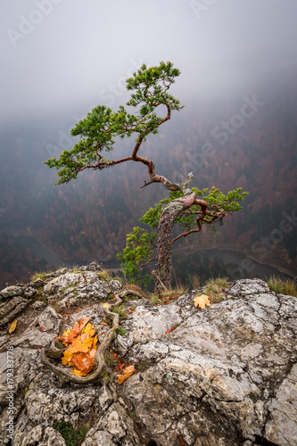 Fotobehang Cappuccino Stunning Sokolica peak in Pieniny mountains at sunrise in autumn