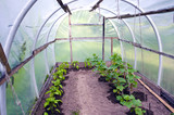 plastic greenhouse with pepper and cucumber sprouts
