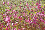 beautiful  summer flowers background