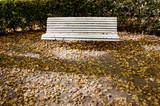 White retro wooden bench in autumn  park