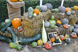 autumn vegetables collection on straw in park