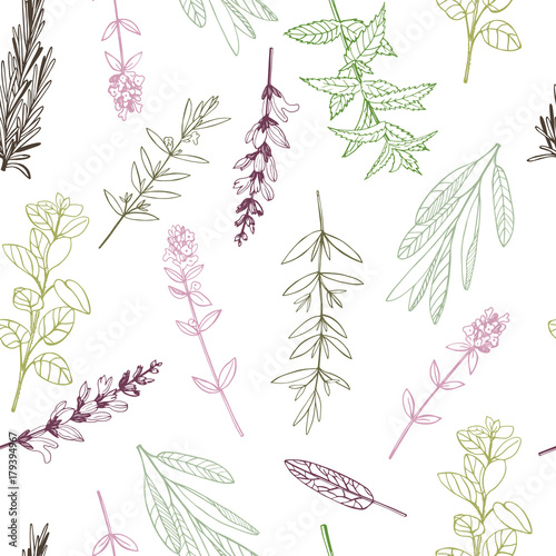 Vector seamless pattern. with hand drawn herbs.