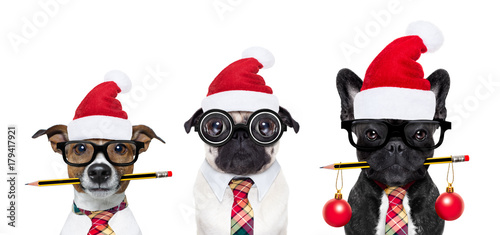 Fotobehang Crazy dog dog office workers on christmas holidays