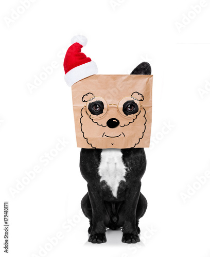 Fotobehang Crazy dog santa claus dog paper bag on head