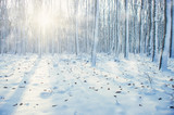 Winter forest  in snow - 179418328