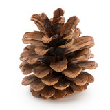 Christmas decor,  pine cone on white background. - 179443797
