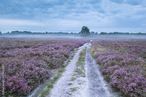 road between pink flowering meadows with heather - 179450987