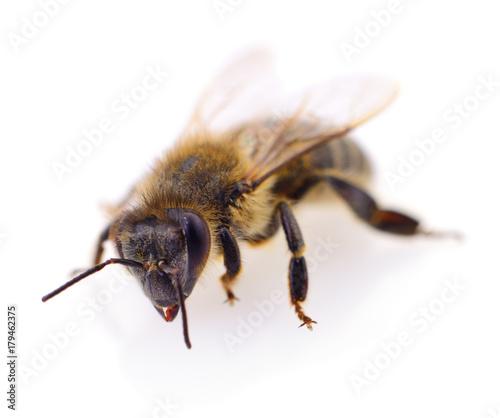Aluminium Bee Honeybee on white.
