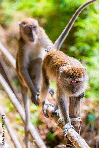 Fotobehang Aap portrait of monkeys in a rain forest on a wooden fence