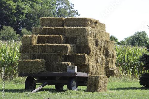Papiers peints Olive Harvested Hay on Wagon