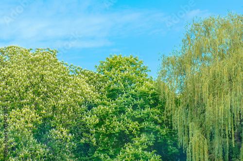 Fotobehang Lente Spring tree in the morning sun. Green spring landscape
