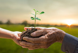 Plant growing on soil with hand holding over sunlight ray and green background