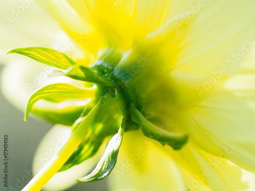 Aluminium Geel Flower