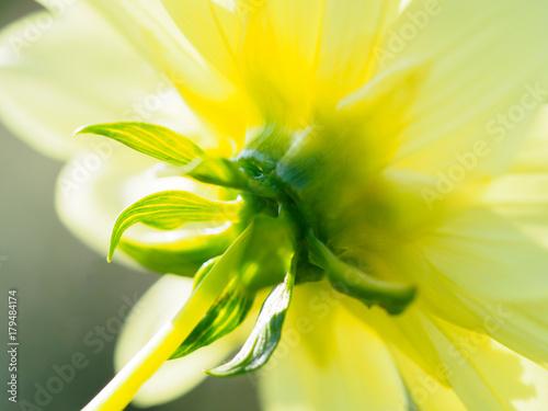 Foto op Canvas Geel Flower