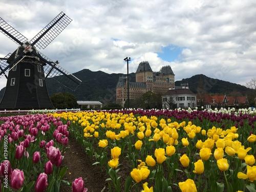 Fotobehang Tulpen Tulip flowers field in front of a windmill