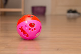 A pink ball for pet playing - 179492329