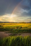 Rice Field and Rainbow - 179505152