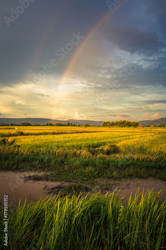 Plexiglas Honing Rice Field and Rainbow