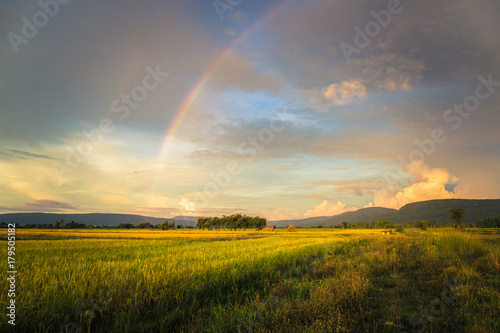 Foto op Canvas Honing Rice Field and Rainbow