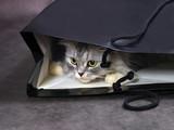 Cat in box - 179507989