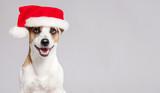 Happy dog in christm...