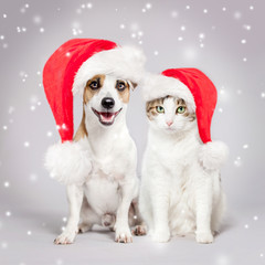Dog and cat in christmas hat
