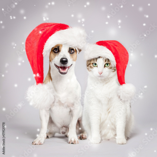 Dog and cat in christmas hat Poster