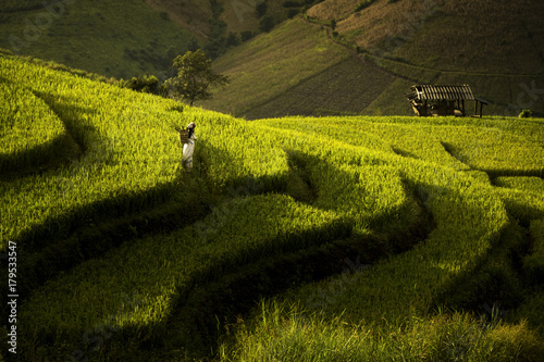 Fotobehang Thailand Karen child in a traditional dress is walking in a rice terrace field, Amphoe Mae Chaem, Chiangmai, north of Thailand