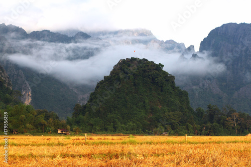 Aluminium Rijstvelden Rice field on terrace hillside in Vangvieng, Laos.Natural landscape of rice farm. cultivation agriculture