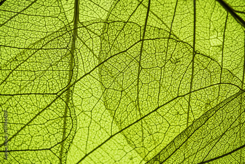 Fotobehang Planten green leaf texture - in detail