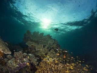 a beautiful reef scenic