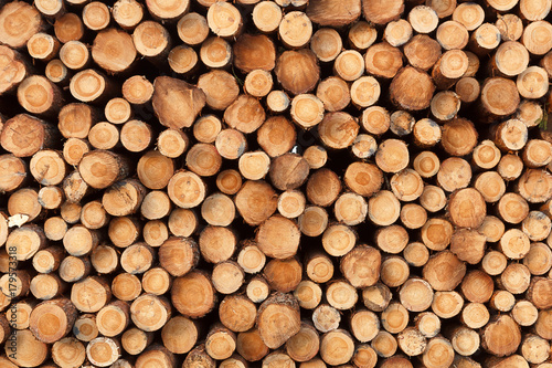 Foto op Plexiglas Brandhout textuur a background from fresh stack of logs