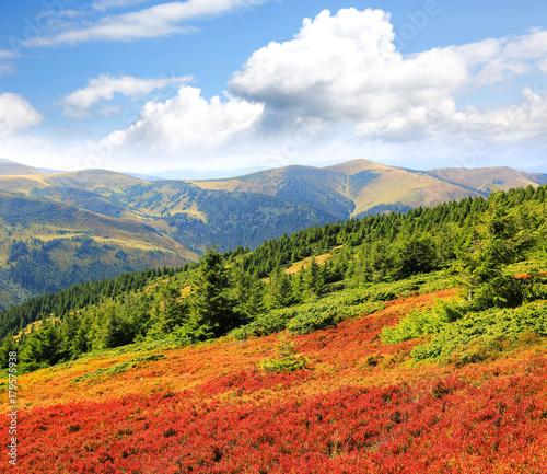 Aluminium Landschappen autumn day in Carpathians